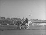Jockey Johnny Longden Riding His Horse Premium Photographic Print