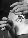 A Doctor Extracting Venom from a Striped Tailed Scorpion Premium Photographic Print