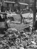 Dogs Digging in Garbage in a Slum District Premium Photographic Print