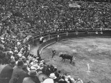 A Matador and a Bull at a Bullfight While the Crowd Watches Premium Photographic Print