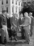 "President Harry S. Truman Holding Bull ""Alabam"" by Rope Premium Photographic Print"