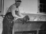 "Scott Washing His Own Dog, Son of ""Brucie"" Premium Photographic Print"