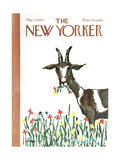 The New Yorker Cover - May 13, 1967 Regular Giclee Print by Warren Miller