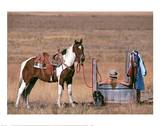 Cowgirl in Heaven Art by David R. Stoecklein