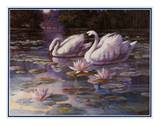 Swans and Bridge Posters by T. C. Chiu