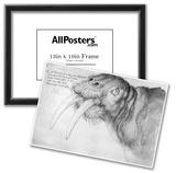 Albrecht Durer (Head of a walrus) Posters
