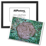 Great Gag Gift (Pile of Poop on Grass) Art Poster Print Prints