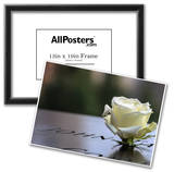 White Rose at September 11 Memorial Print
