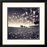 Manada Framed Photographic Print by Luis Beltran