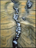 Rocks Caught in Sandstone Formations, Seal Rock Beach, Oregon, USA Mounted Photo by  Jaynes Gallery