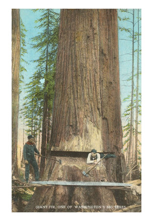 Lumberjacks Felling Fir, Washington Posters at AllPosters.