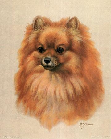 pomeranian wallpaper. Pomeranian Prints by Judy