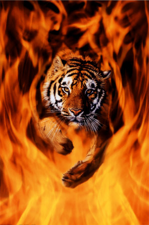 fire tiger of doom thats going bananas