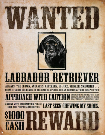 Shamwow Wanted Poster  Examples Of Wanted Posters
