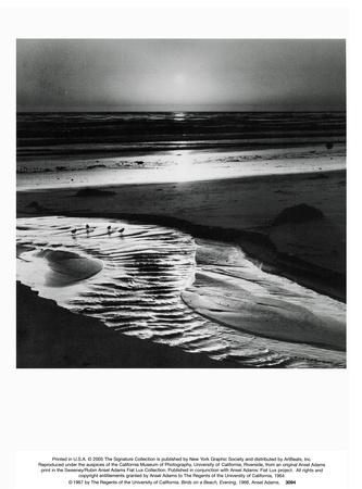 Ptáci na pláži Umělecká reprodukce