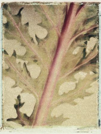Kale Photographic Print by Jennifer Kennard