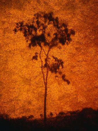 Orange Sky Behind Tree Photographic Print by Andre Burian