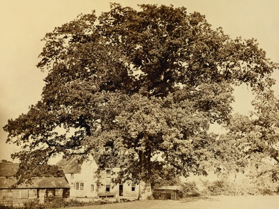 Oak in Summer Photographic Print by Edward Fox