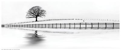Winter Oak in a Field Posters by M. Barbone