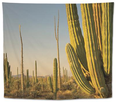 Cirio Trees and Cardon Cacti Near Catavina Tapestry by Witold Skrypczak