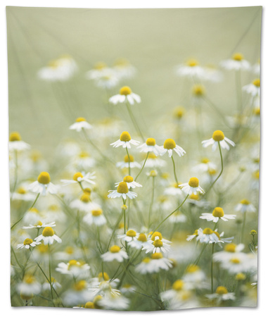 Real Camomile, Chamomilla Recutita Tapestry by Herbert Kehrer
