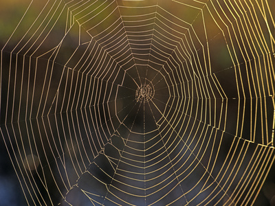Spider Web, Florida Photographic Print by Tim Fitzharris