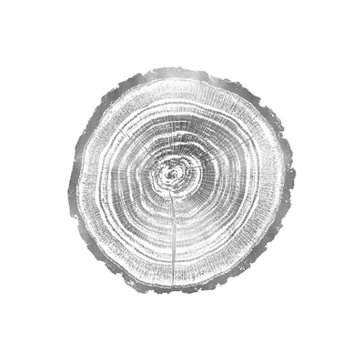 Timber Silver II Giclee Print by Danielle Carson