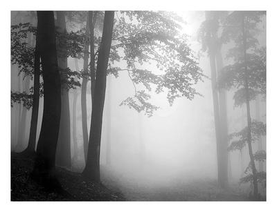 Woods Posters by  PhotoINC Studio
