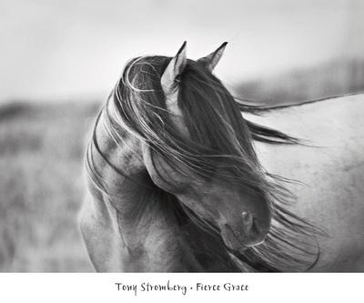 Fierce Grace Posters by Tony Stromberg