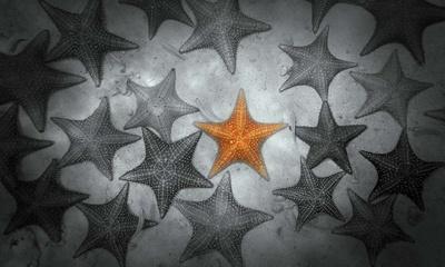 Pop of Color Orange Starfish Poster van  Color Me Happy