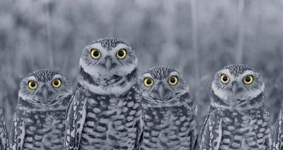 Pop of Color Burrowing Owl Family Poster van  Color Me Happy