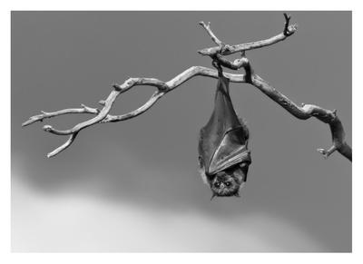 Sleepless Giclee Print by Tj Millar