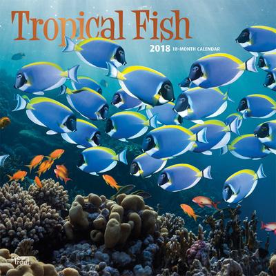 Tropical Fish - 2018 Calendar Calendari