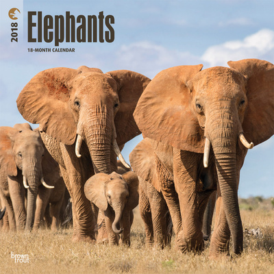 Elephants - 2018 Calendar Calendari