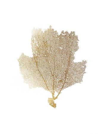 Gold Foil Sea Fan II Prints by  Vision Studio
