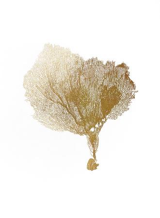 Gold Foil Sea Fan IV Prints by  Vision Studio