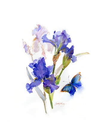Iris with Blue Butterfly, 2016 Giclee Print by John Keeling