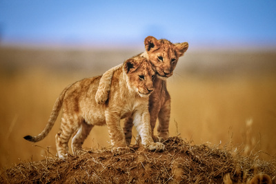 Brothers for Life Photographic Print by Jeffrey C. Sink