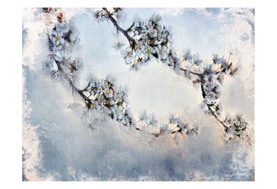 Magnolia Branch Posters by Kimberly Allen