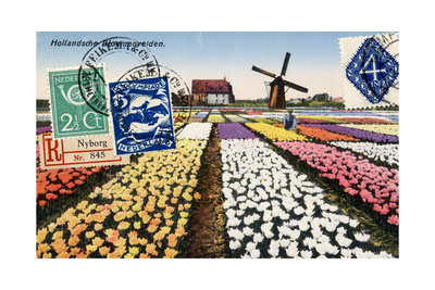 Tulips and Windmills, Dutch Vintage Postcard Collage Prints by  Piddix