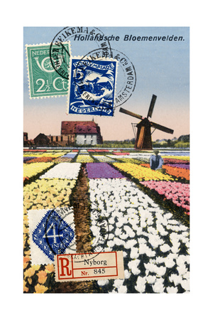 Tulips and Windmills, Dutch Vintage Postcard Collage Print by  Piddix