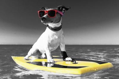 Pop of Color Surf's Up Dog Posters van  Color Me Happy