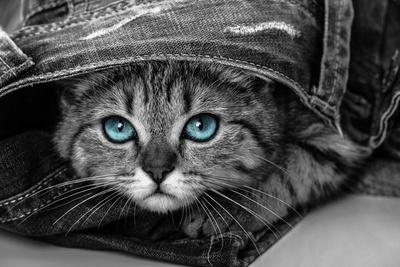 Pop of Color Kitten Posters van  Color Me Happy