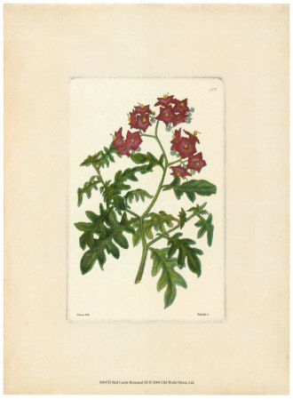 Red Curtis Botanical III Art Print