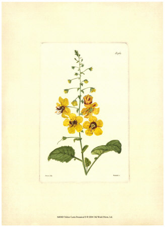 Yellow Curtis Botanical II Art Print