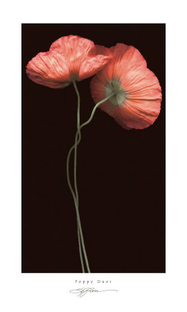 Poppy Duet Poster by S. G. Rose