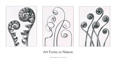 Art Forms in Nature I Poster by Karl Blossfeldt