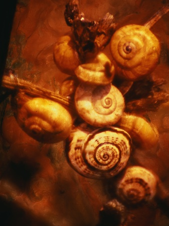 Snails Photographic Print by Andre Burian