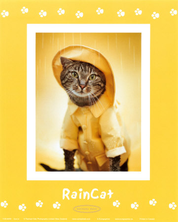 Chat de pluie Reproduction d'art