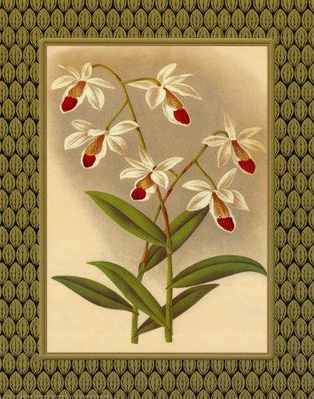 Classic Orchids I Print by Tara Wilde
